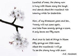 AE Housman - Loveliest of trees